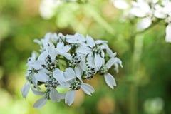Weiße Blumen I die Tropen lizenzfreie stockfotografie
