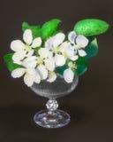 Weiße Blumen im Glas Lizenzfreie Stockfotografie