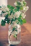 Weiße Blumen im Glasvase Stockbilder