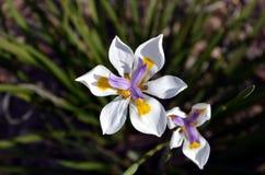 Weiße Blumen im Gras Stockbild