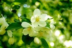 Weiße Blumen mit bokeh Lizenzfreies Stockfoto