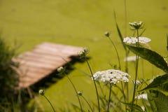 Weiße Blumen mit Dock Stockfoto