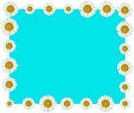 Weiße Blumen-Rebgrenzblau Hintergrund Lizenzfreies Stockfoto