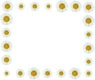 Weiße Blumen-Rebgrenze Lizenzfreie Stockfotografie