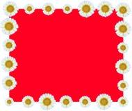 Weiße Blumen-Rebgrenzrot-Hintergrund Stockfotografie