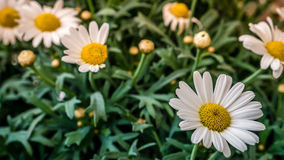 Weiße Blumen schließen oben Stockbild
