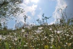 Weiße Blumen und Baum des Frühlinges in der Türkei Stockfotografie