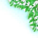 Weiße Blumen und Blätter lizenzfreies stockbild