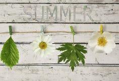 Weiße Blumen und Blätter auf einem Seil mit Wäscheklammer Stockfoto