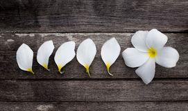 Weiße Blumen und Blumenblätter Stockfoto