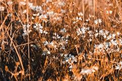 Weiße Blumen und monophonisch, Gras in den warmen Tönen stockfotos
