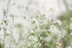 Weiße Blumen, undeutlicher Blumenhintergrund lizenzfreies stockfoto