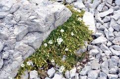 Weiße Blumen-wachsendes Stockbild