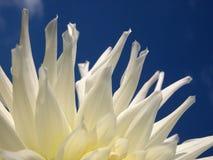 Weiße Blumenblätter Lizenzfreie Stockfotografie