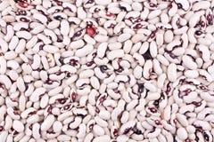 Weiße Bohnen Stockfotografie