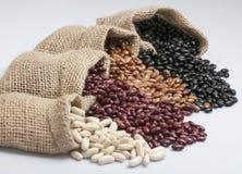 Weiße Bohnen, Gartenbohnen, Pintobohnen und schwarze Bohnen Stockbild