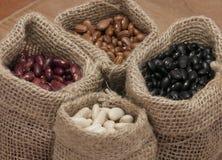 Weiße Bohnen, Gartenbohnen, Pintobohnen und schwarze Bohnen Lizenzfreies Stockbild