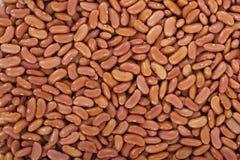 Weiße Bohnen oder rote Bohnen Stockfotos