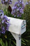 Weiße Briefkasten-Purpurblumen Stockfotografie