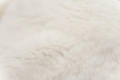 Weiße Cat Fur Lizenzfreies Stockfoto