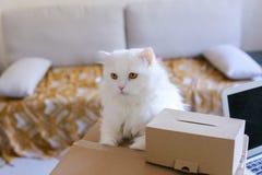 Weiße Cat Sitting auf Tabelle und möchte in großen Kasten kommen Stockbild