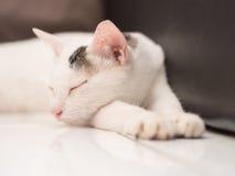 Weiße Cat Sleeping auf Boden Stockfotos