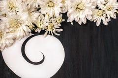 Weiße Chrysantheme auf dunkelblauem hölzernem Hintergrund Stockfoto