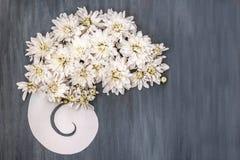 Weiße Chrysantheme auf dunkelblauem hölzernem Hintergrund Stockfotos
