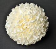Weiße Chrysantheme auf schwarzem Hintergrund Stockbilder