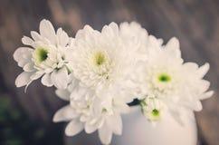 Weiße Chrysanthemeblume Lizenzfreies Stockbild
