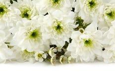Weiße Chrysanthemen über Weiß Stockfotografie