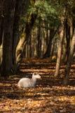 Weiße Damhirsche im Wald stockfotografie