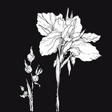 Weiße dekorative Entwurf Irisblume Lizenzfreies Stockbild