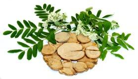 Weiße Ebereschenblumen und frische Blätter, Wacholderbuschstand unter einem heißen lokalisiert lizenzfreie stockbilder