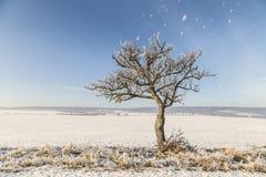 Weiße eisige Bäume im Schnee umfassten Landschaft Stockfoto