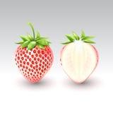 Weiße Erdbeere Pineberry und eine Hälfte der weißen Erdbeere, Frucht, transparent, Vektor Lizenzfreies Stockbild
