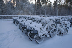 Weiße Fahrräder Stockfotografie