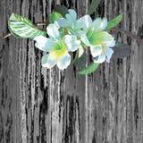 Weiße Farbe des Ölgemäldes der Verkündertrompetenblume stockfotografie