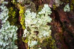 Weiße Farne auf Baum im Wald Stockfoto