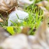 Weiße Feder auf grünem Gras im Herbst Lizenzfreie Stockfotos
