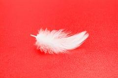 Weiße Feder auf Rot Stockbilder