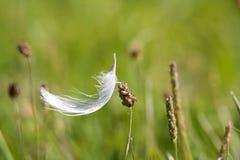 Weiße Feder im Gras Stockbilder