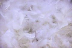 Weiße Federn des Hintergrundes Stockfotografie