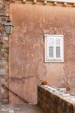 Weiße Fensterläden auf gealterter kleiner Lampe und Katze der Wand Lizenzfreie Stockfotografie