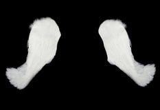 Weiße Flügel getrennt auf Schwarzem Lizenzfreie Stockfotografie