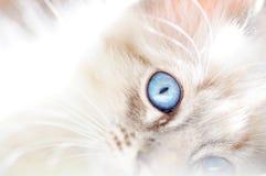 Weiße flaumige Katze des träumerischen weichen abstrakten Hintergrundes Lizenzfreie Stockbilder