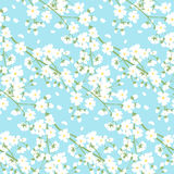 Weiße Frühlingsbaumblumen Lizenzfreies Stockfoto