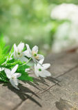 Weiße Frühlingsblumen auf dem alten Holz Lizenzfreies Stockbild