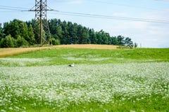 Weiße Frühlingsblumen auf grünem Hintergrund Lizenzfreies Stockfoto