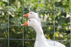Bauernhof-Zaun Wire stockfoto. Bild von landschaft, knoten - 44966450